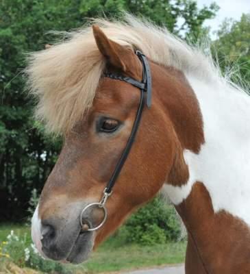 HKM Nackenriemen mit Stirnband für Islandpferde, schwarz