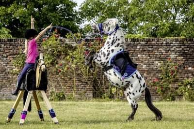 HKM Wendeschabracke -Funny Horses- 2 in 1, Shetty, dunkelblau/dunkelpink