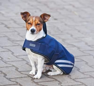 BUSSE Hundedecke MOVE
