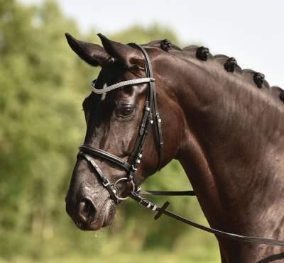 BUSSE solibel Trense CRYSTAL, Pony, schwarz/Crystal