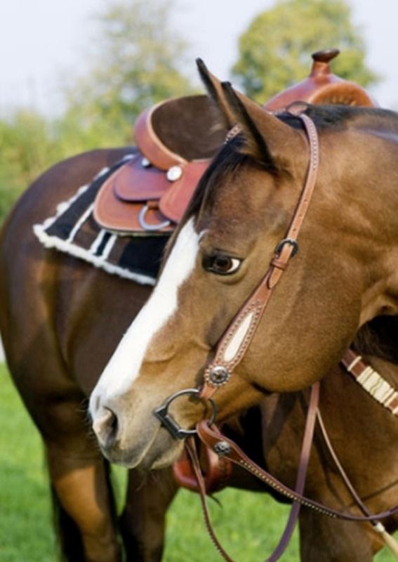 HKM TEXAS Einohrkopfstück -Dots- mit Kuhfell, Pony, dunkelbraun